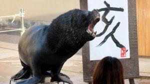 Aksi Menggemaskan Singa Laut Di Pasar Ikan Amerika Selatan